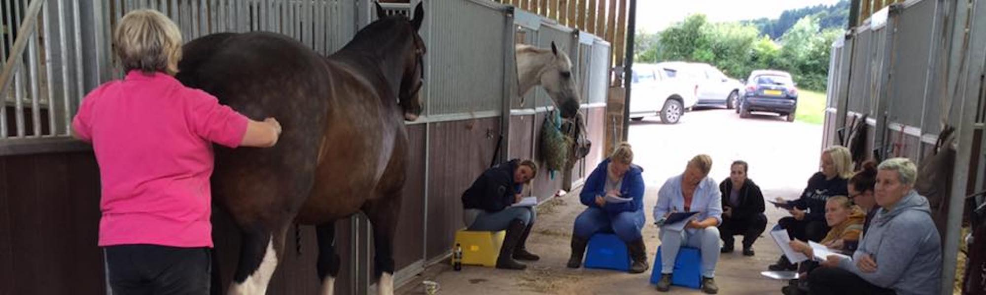 Equine Massage Training header image 2